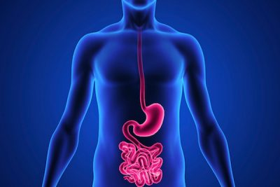 gut and digestion